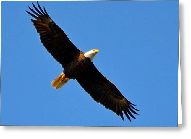 Best Bald Eagle On Blue Greeting Card
