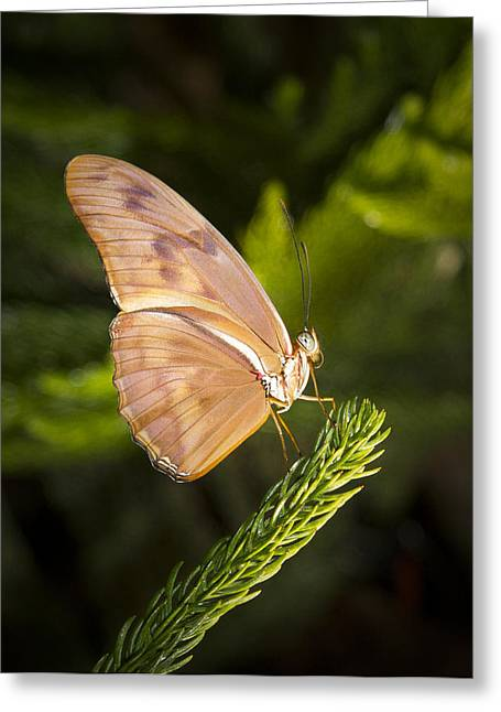 Best Side Of The Butterfly Greeting Card by Jean Noren