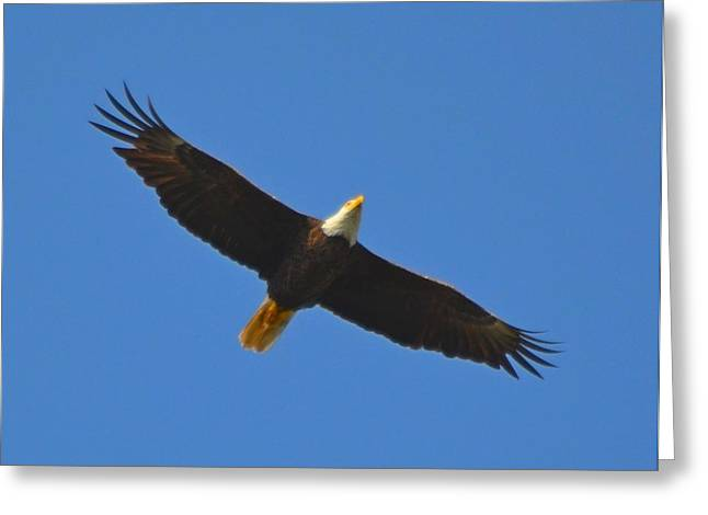 Best Soaring Bald Eagle Greeting Card by Jeff at JSJ Photography