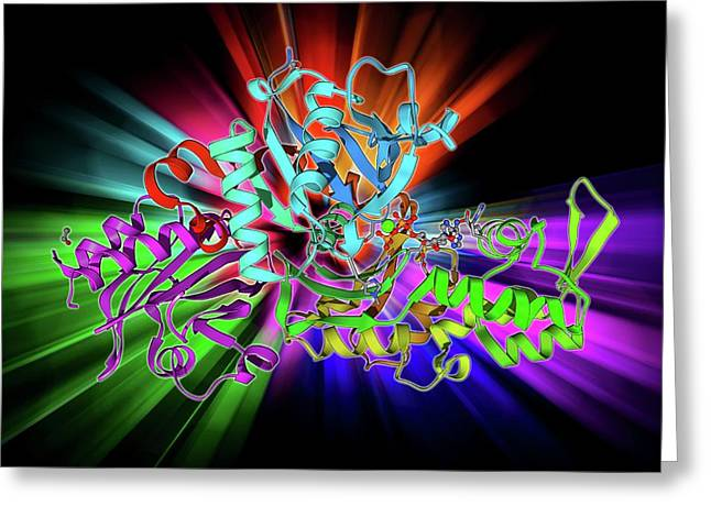 Beta-actin Molecule Greeting Card