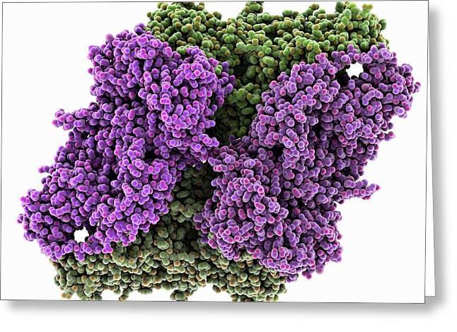 Beta-galactosidase Molecule Greeting Card by Laguna Design