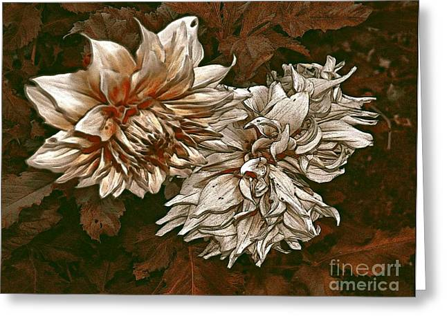 Greeting Card featuring the photograph Betty's Beauty 1 by Don Wright