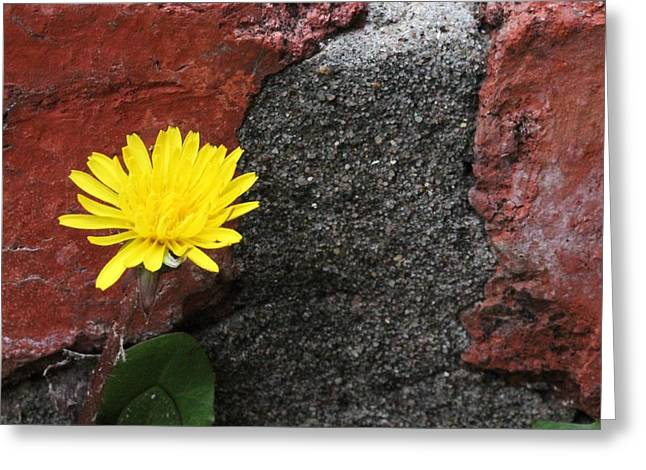 Between The Rocks And A Hard Place Greeting Card by Lorri Crossno