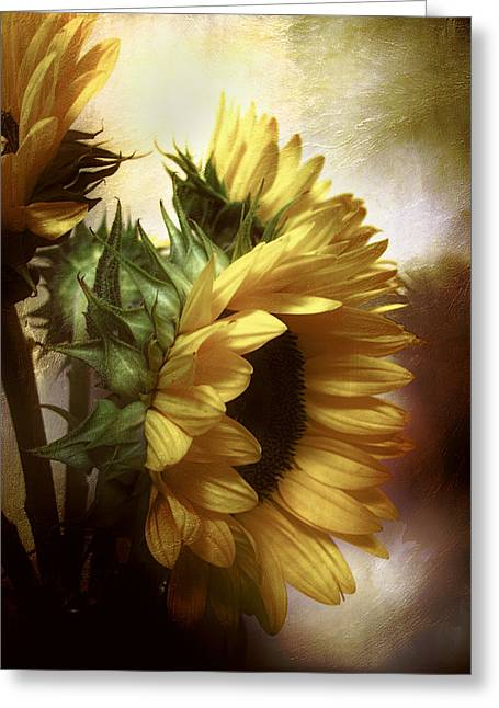 Between The Shadows Greeting Card