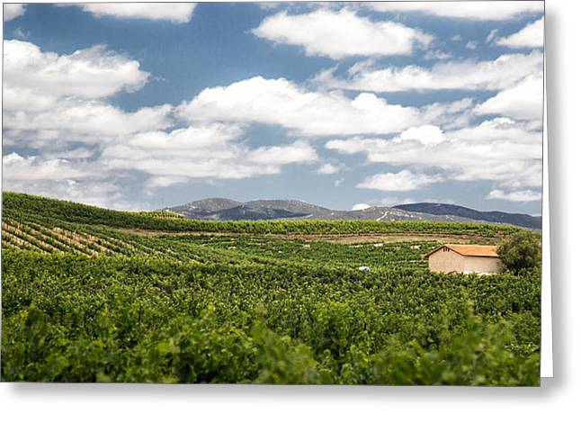 Between The Vines Greeting Card by Peter Tellone