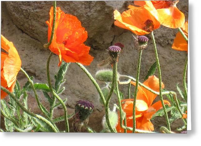 Beulah Orange Greeting Card by Tammy Sutherland
