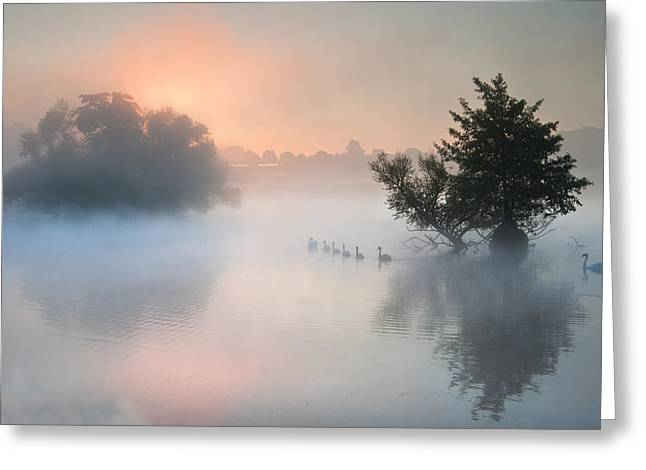 Bevy Herd Of Swans On Misty Foggy Autumn Fall Lake Greeting Card by Matthew Gibson