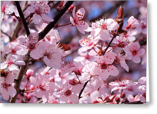 Bevy Of Blossoms Greeting Card