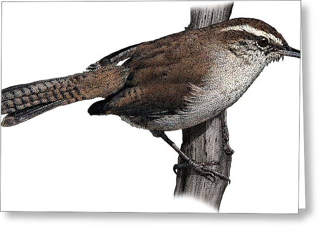 Bewicks Wren, Illustration Greeting Card by Roger Hall