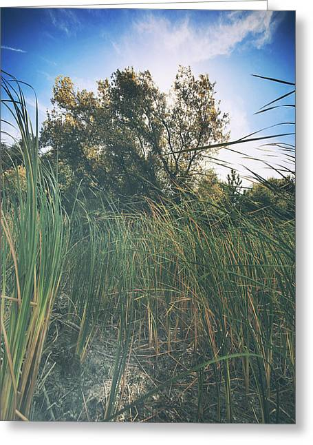 Beyond The Grass Greeting Card by Laurie Search