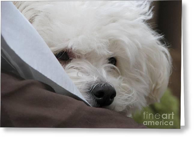 Molly Greeting Card