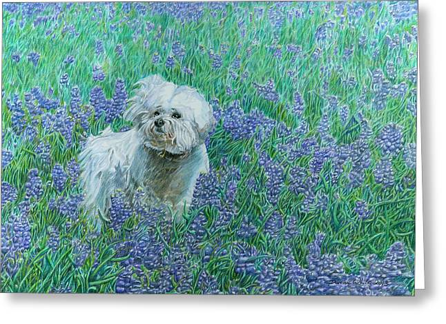 Bichon In The Bluebonnets Greeting Card