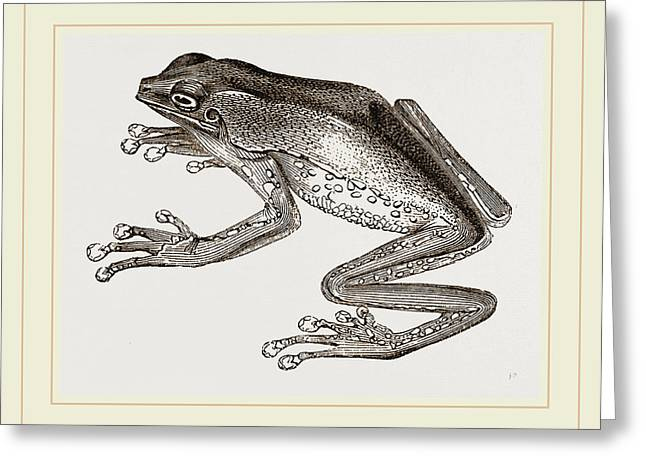 Bicoloured Tree-frog Greeting Card by Litz Collection