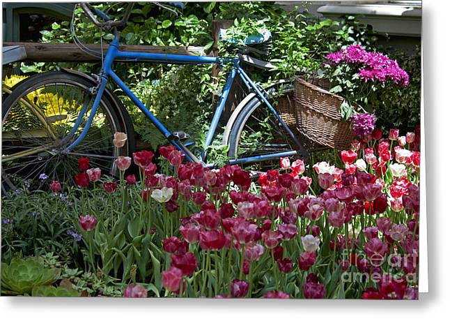 Bicycle In My Garden Greeting Card