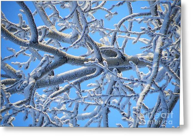 Bifurcations In White And Blue Greeting Card by Brian Boyle