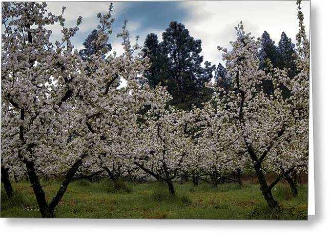 Big Apple Blossoms Greeting Card