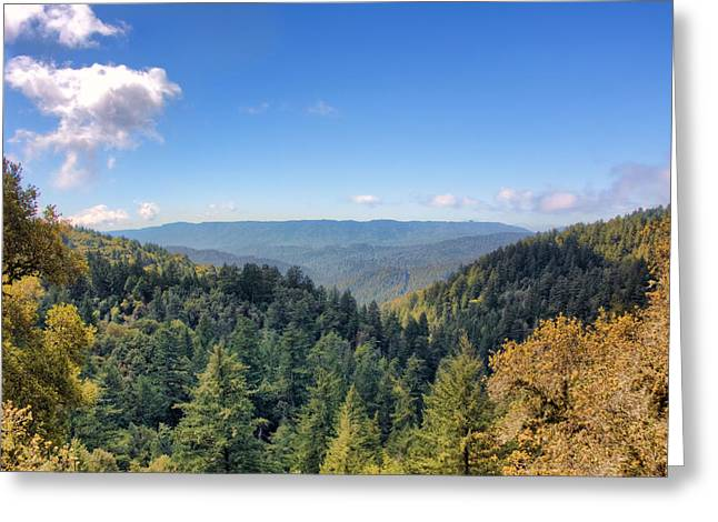 Big Basin Redwoods Greeting Card by Brent Durken