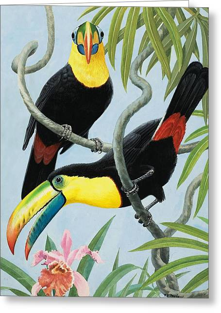 Big-beaked Birds Greeting Card by RB Davis