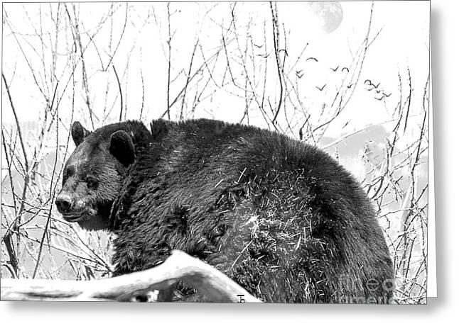 Big Bear In Black And White Greeting Card by Janice Rae Pariza
