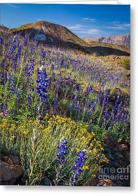 Big Bend Flower Meadow Greeting Card