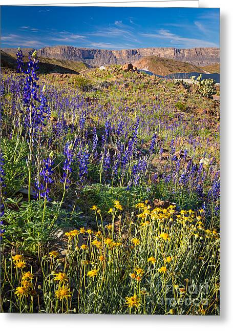 Big Bend Flowers Greeting Card by Inge Johnsson