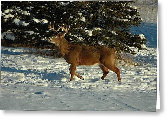 Big Boy In Early Winter Greeting Card by Sandra Updyke