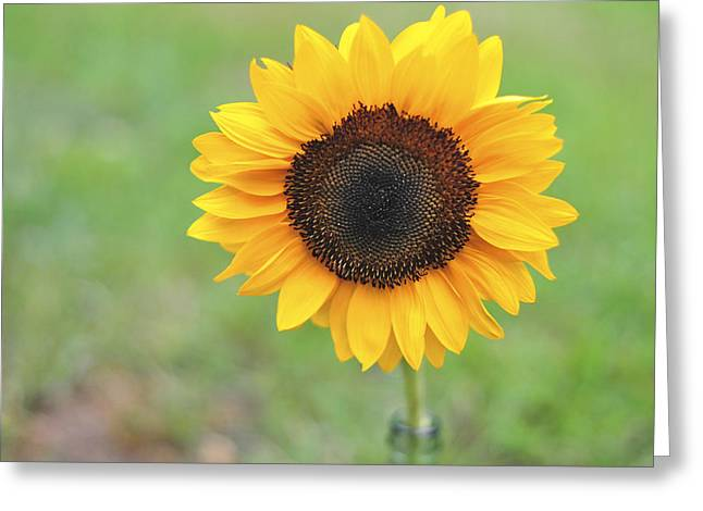 Big Bright Yellow Colorful Sunflower Art Print Greeting Card by Terry DeLuco
