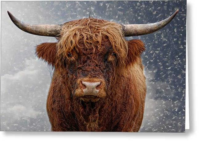 Big Bull Greeting Card by Joachim G Pinkawa