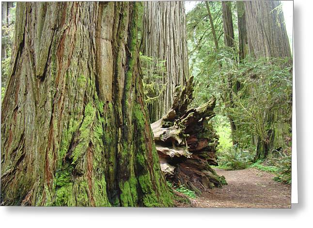 Big California Redwood Tree Forest Art Prints Greeting Card by Baslee Troutman