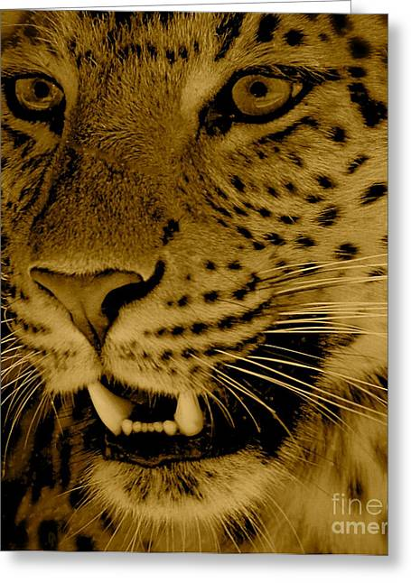 Big Cat In Sepia Greeting Card by Louise Fahy