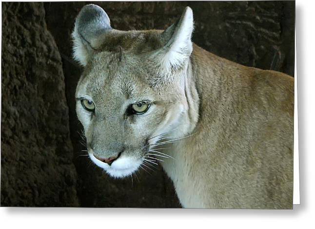 Greeting Card featuring the photograph Big Cat by Rhonda McDougall