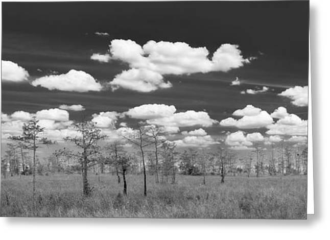 Big Cypress Prairie Greeting Card