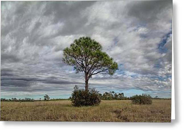 Big Cypress Greeting Card