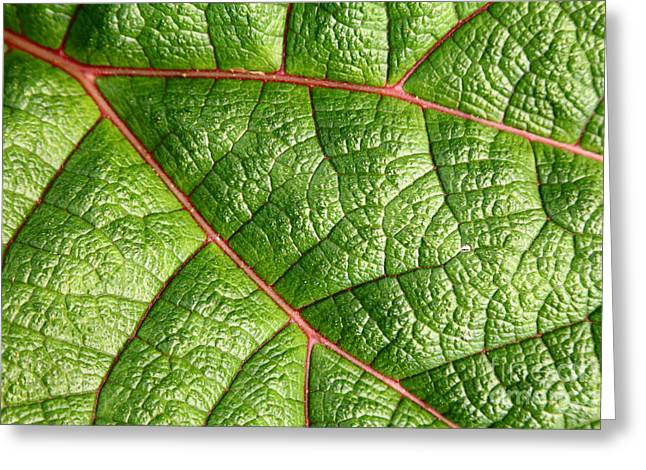 Big Green Leaf 5d22460 Greeting Card by Wingsdomain Art and Photography