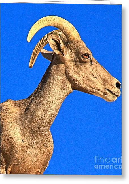 Big Horn Against Blue Greeting Card by Adam Jewell
