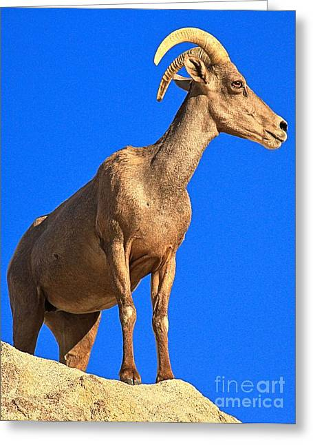 Big Horn Against The Sky Greeting Card by Adam Jewell