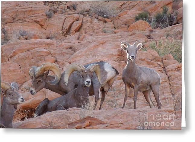 Big Horn Group Pose Greeting Card