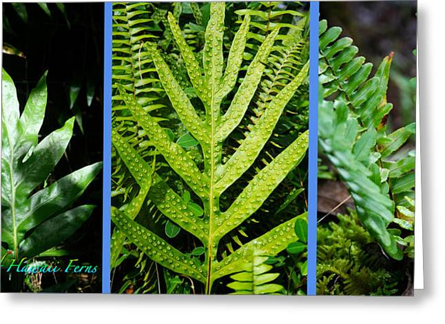 Big Island Of Hawaii Ferns Greeting Card by Colleen Cannon