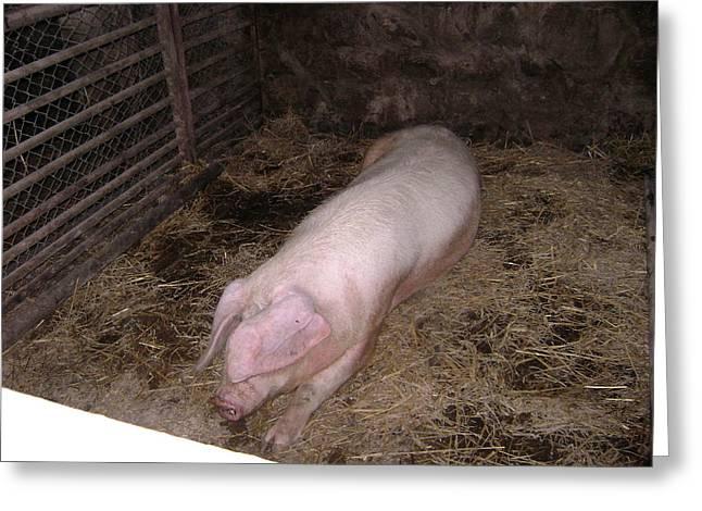 Big Pig Greeting Card