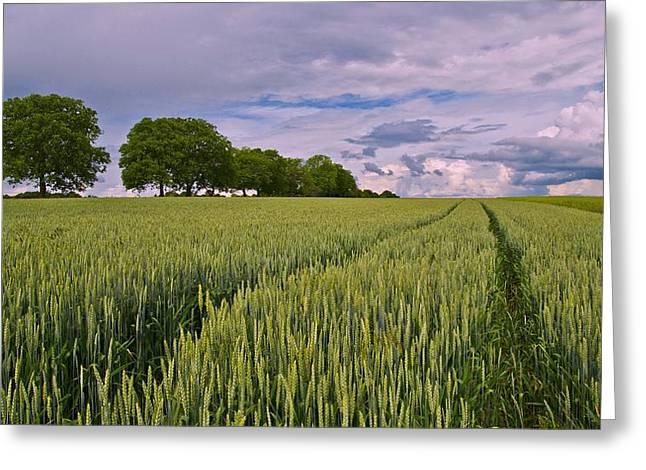 Big Sky Montana Wheat Field  Greeting Card