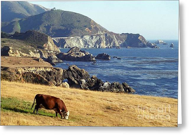 Big Sur Cow Greeting Card