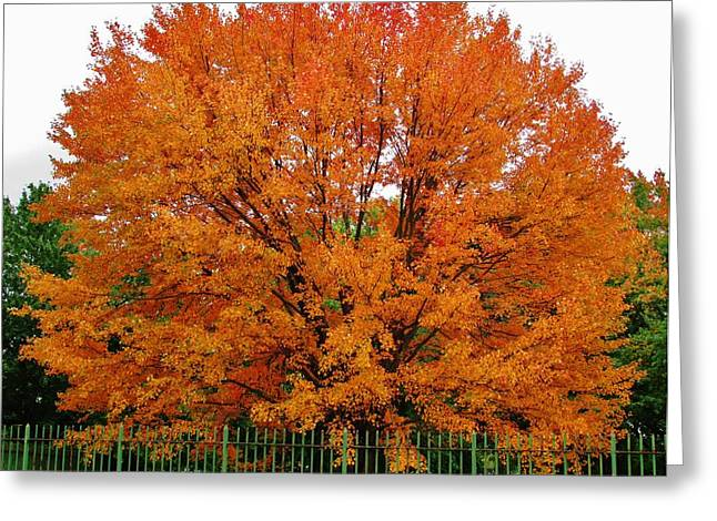 Big Tree In Autumn Greeting Card by Thomas  McGuire