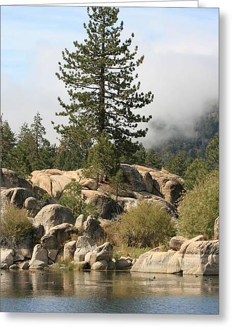 Big Tree In Big Bear Greeting Card by Darrin Aldridge