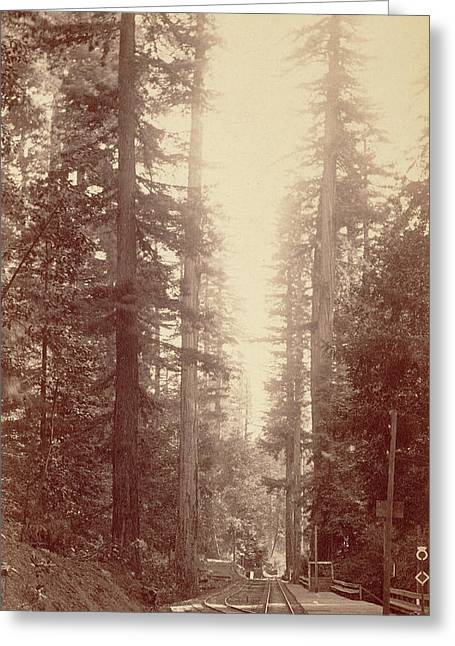 Big Tree Station, Santa Cruz William Henry Jackson Greeting Card by Litz Collection
