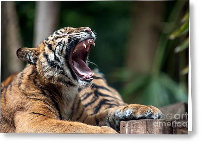 Big Yawn Greeting Card by Ray Warren