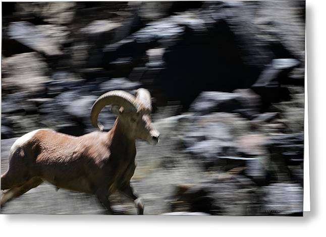 Bighorn Blur Greeting Card by Britt Runyon