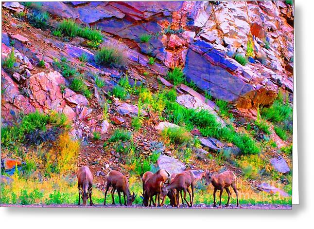 Greeting Card featuring the photograph Bighorn Grazing Convention by Ann Johndro-Collins