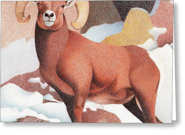 Bighorn Sheep Winter Greeting Card