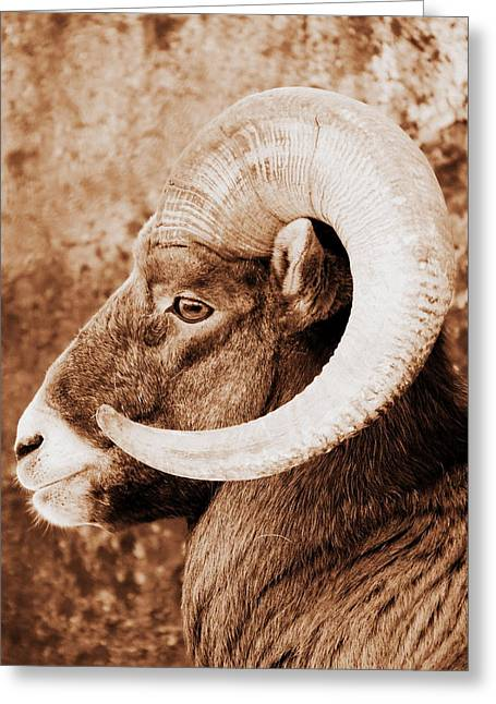 Bighorn Sheep Profile Greeting Card by Ramona Johnston