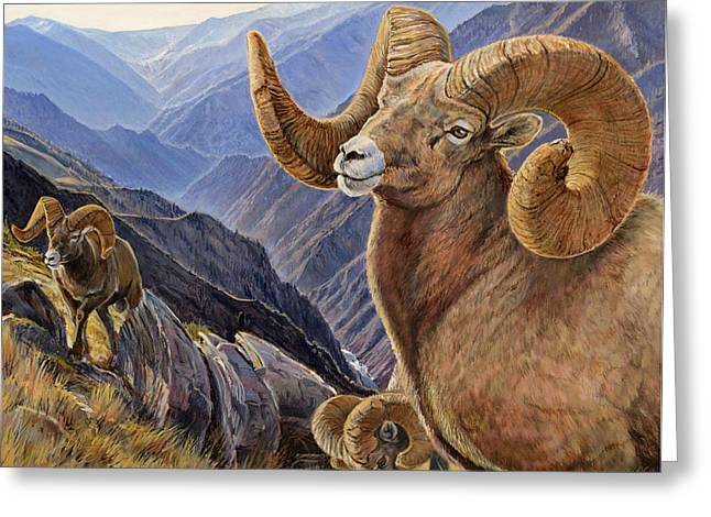Bighorn Trio Greeting Card